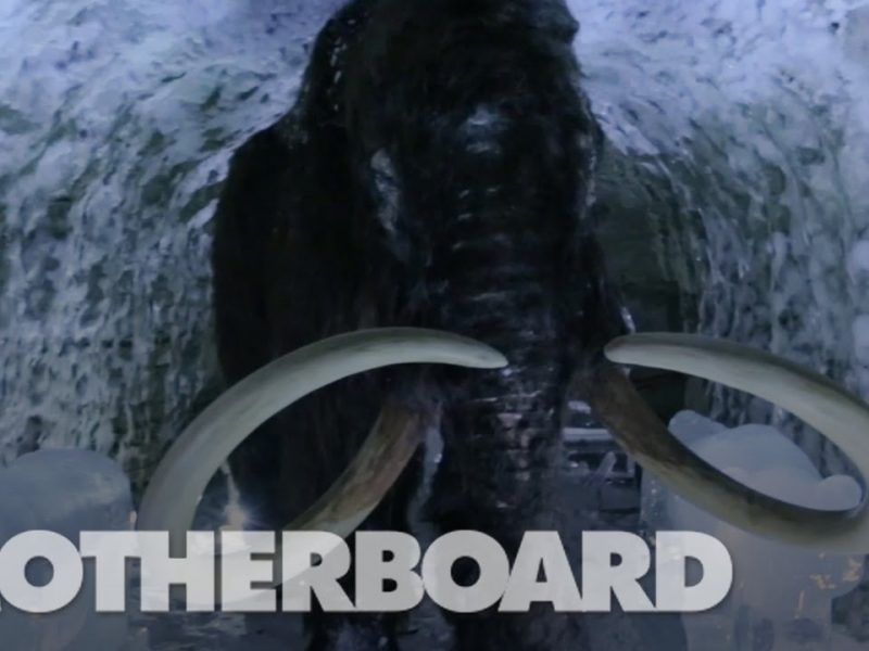 Igor-Kropotov-Director-of-Photography-Motherboard-The-Mission-to-Resurrect-the-Woolly-Mammoth